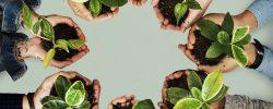 ¿Cómo reducir la huella de carbono de su organización?