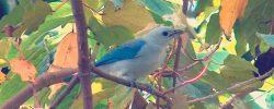 ¿Cuáles son las especies en vía de extinción en Colombia?