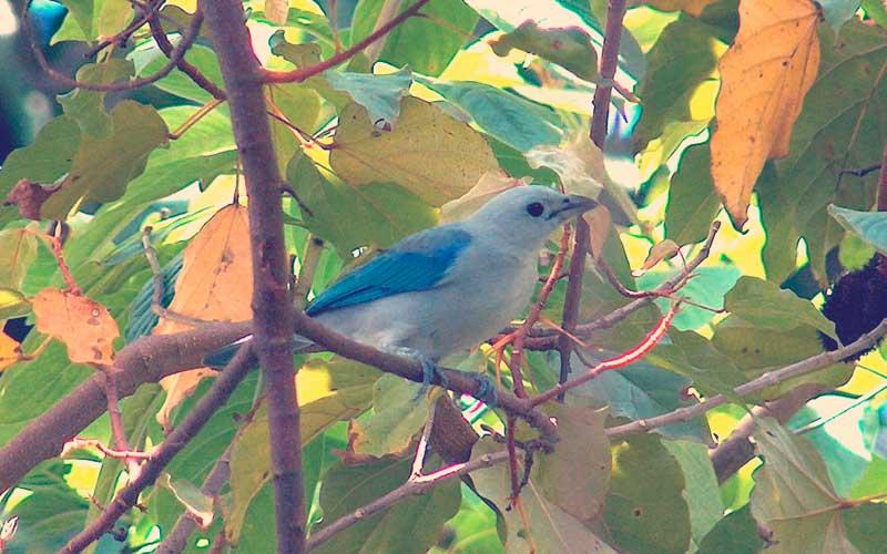 pájaro azulejo sobre rama de un árbol