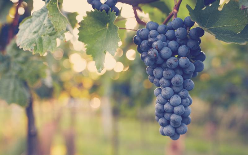 racimo de uvas usadas para mascarillas naturales