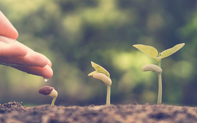 semillas de frijol empezando a crecer como actividad para niños