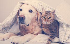 Perro y gato juntos con una sabana en su cabeza