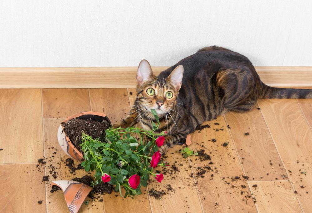 Gato mirando la cámara al lado de un florero que rompió