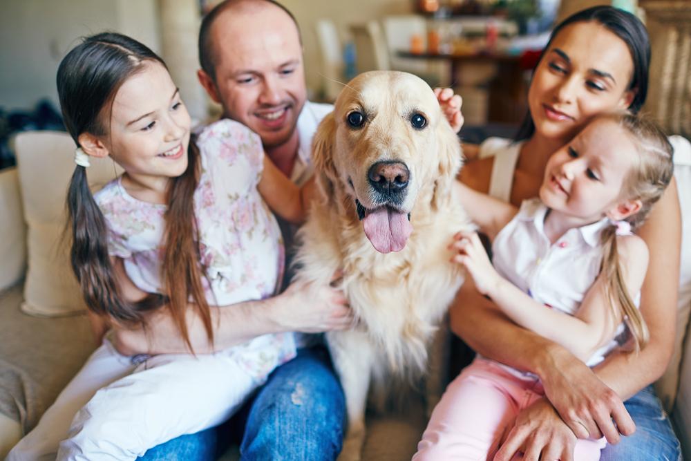 Perro labrador junto a su familia en casa