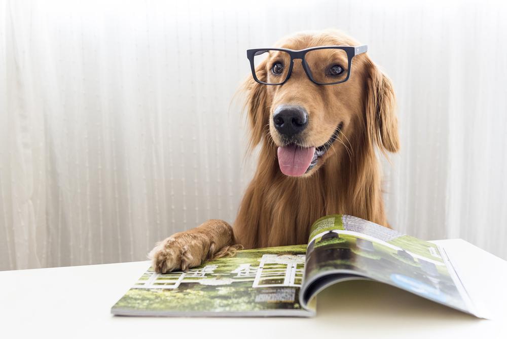 Perro con gafas y sus patas sobre un libro