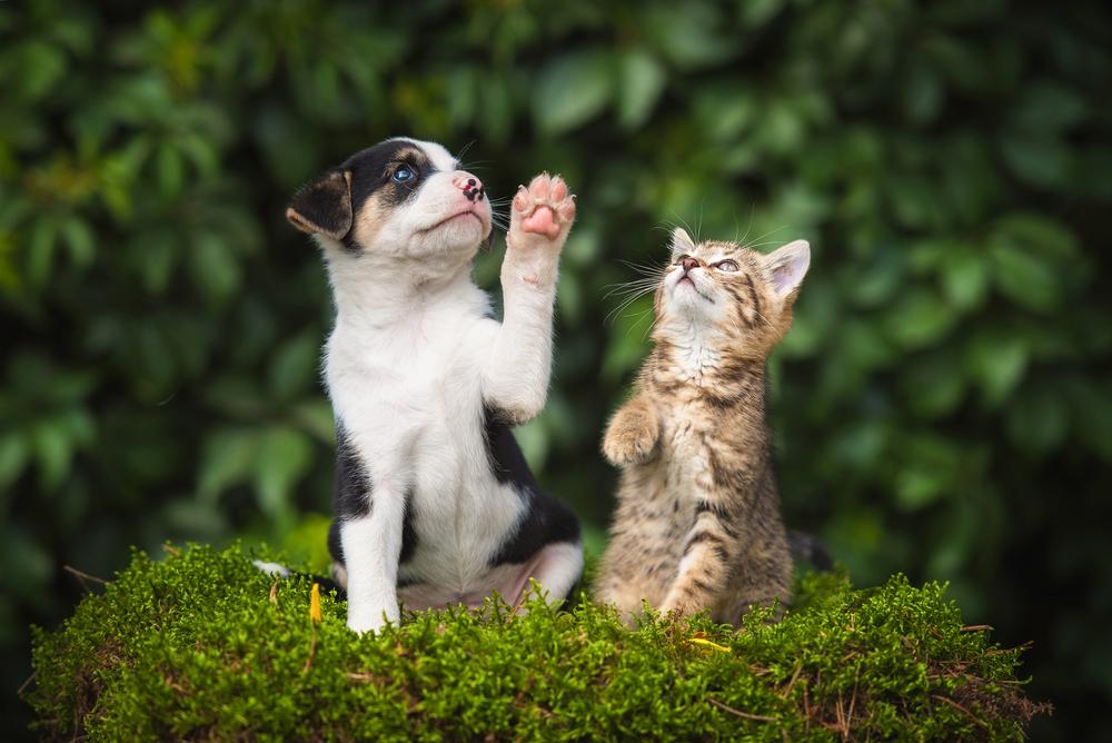 Un cachorro junto a un gato