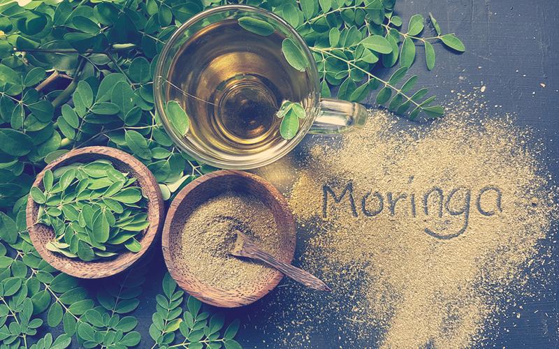 Té, polvo y hojas de moringa