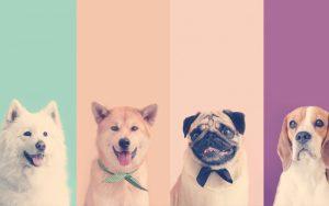 Diferentes mascotas posando ante la cámara