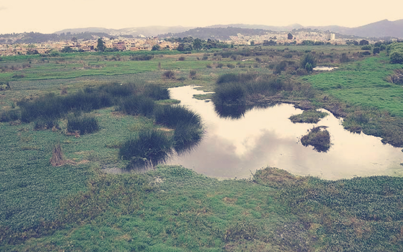 Humedal Juan Amarillo