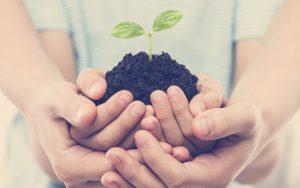 Manos de humanos sosteniendo una planta