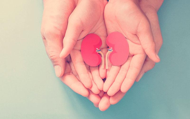 Adultos y niños sosteniendo papel en forma de riñón, Día Mundial del Riñó