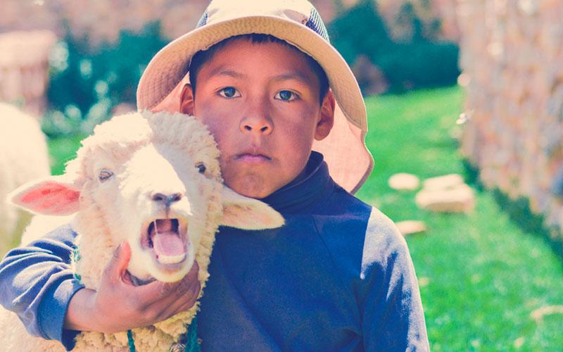 Niño en el campo junto con una oveja