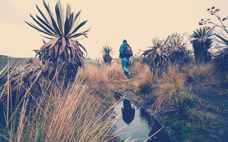 Un hombre caminando por el Parque Nacional de Chingaza