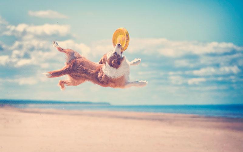 Perro jugando en la playa