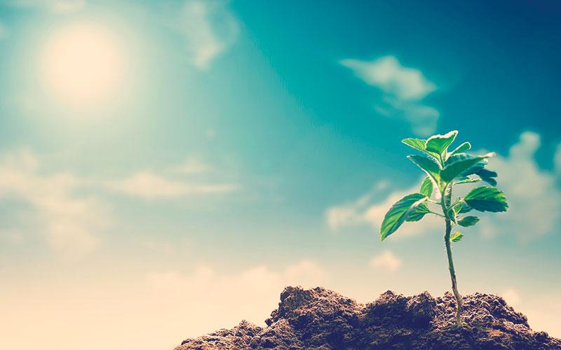 Sol iluminando una planta que esta creciendo