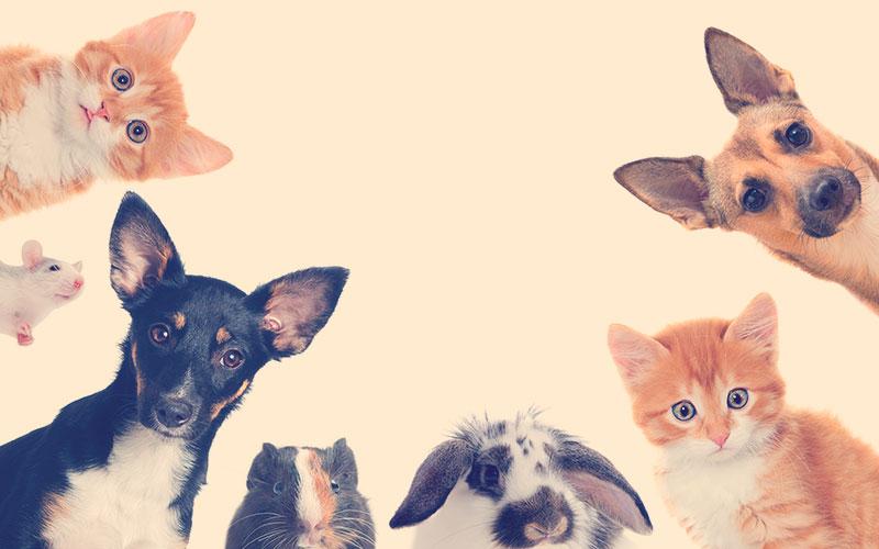 perros, gatos, conejos y hámster mirando a la cámara