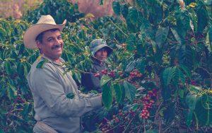 Recolectores de café colombiano