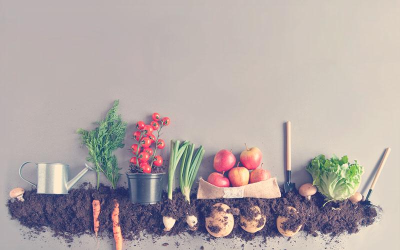 alimentos cultivados en casa