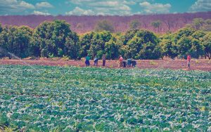campesinos trabajando en un emprendimiento rural
