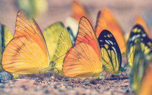 las mariposas tailandesas inundan minerales en el campamento Ban Krang, Parque Nacional Kaeng
